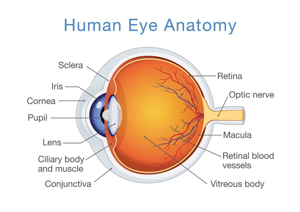 Retinal Specialists in Baltimore
